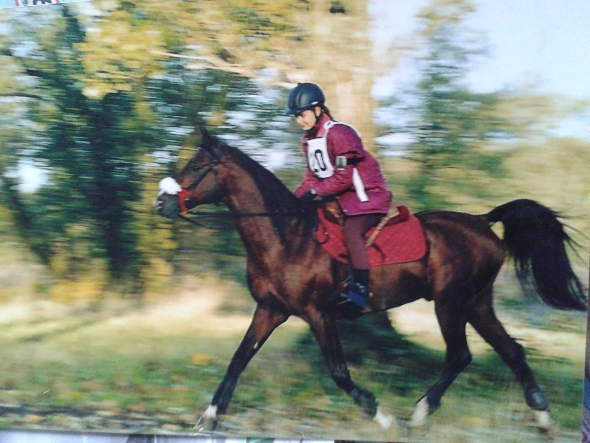 Największa końska miłość ogier Arabski Artbi start w Koczargach Kampinos 2x80 km. Fot. Archiwum Patrycji Bereznowskiej